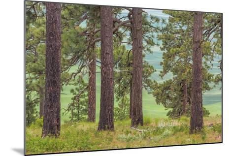USA, Washington State, Palouse Hills. Pine Forest Scenic-Don Paulson-Mounted Photographic Print