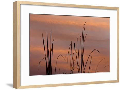 Tennessee, Falls Creek Falls State Park. Sunrise on Cattails in Lake-Don Paulson-Framed Art Print