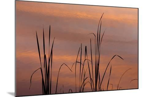 Tennessee, Falls Creek Falls State Park. Sunrise on Cattails in Lake-Don Paulson-Mounted Photographic Print