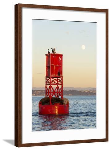 Washington, California Sea Lions and Cormorants. Full Moon-Trish Drury-Framed Art Print