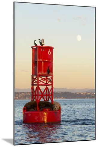 Washington, California Sea Lions and Cormorants. Full Moon-Trish Drury-Mounted Photographic Print