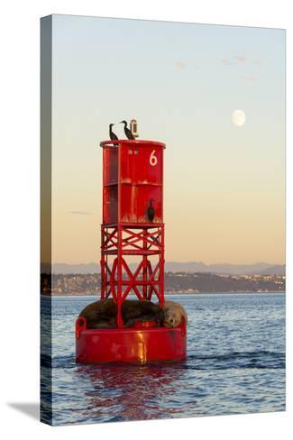 Washington, California Sea Lions and Cormorants. Full Moon-Trish Drury-Stretched Canvas Print