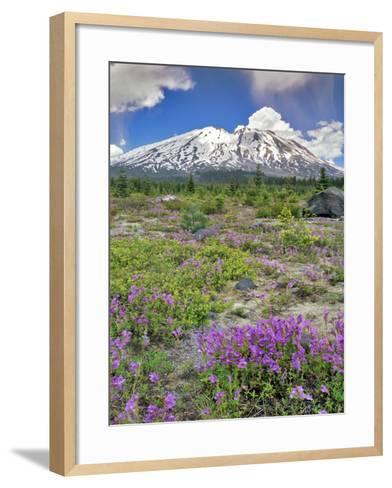 Washington State, Gifford Pinchot NF. Mount Saint Helens Landscape-Steve Terrill-Framed Art Print