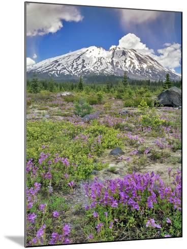 Washington State, Gifford Pinchot NF. Mount Saint Helens Landscape-Steve Terrill-Mounted Photographic Print