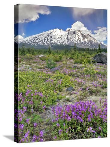 Washington State, Gifford Pinchot NF. Mount Saint Helens Landscape-Steve Terrill-Stretched Canvas Print