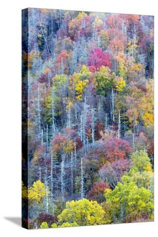 Tennessee, Great Smoky Mountains NP, View Along Newfound Gap Road-Jamie & Judy Wild-Stretched Canvas Print