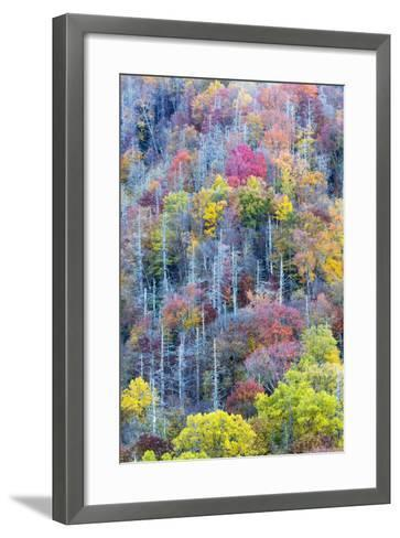Tennessee, Great Smoky Mountains NP, View Along Newfound Gap Road-Jamie & Judy Wild-Framed Art Print