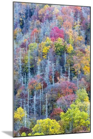 Tennessee, Great Smoky Mountains NP, View Along Newfound Gap Road-Jamie & Judy Wild-Mounted Photographic Print