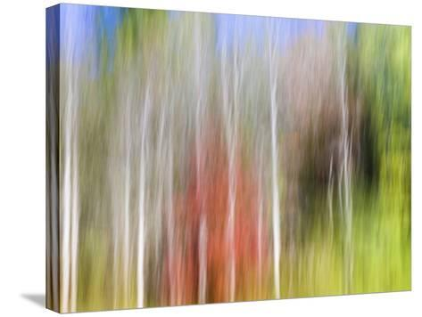 USA, Tennessee, Cherokee NF. Abstract Tree Reflections in Pond-Don Paulson-Stretched Canvas Print
