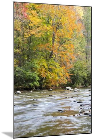 Tennessee, Great Smoky Mountains National Park, Little River-Jamie & Judy Wild-Mounted Photographic Print