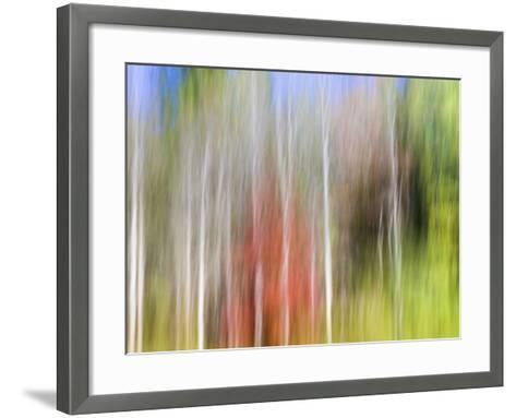 USA, Tennessee, Cherokee NF. Abstract Tree Reflections in Pond-Don Paulson-Framed Art Print