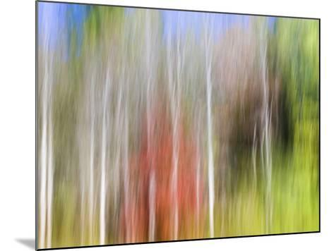 USA, Tennessee, Cherokee NF. Abstract Tree Reflections in Pond-Don Paulson-Mounted Photographic Print