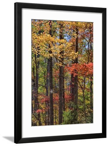 Tennessee, Great Smoky Mountains NP, Roaring Fork Motor Nature Trail-Jamie & Judy Wild-Framed Art Print