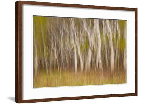 USA, Montana. Aspen Forest Abstract-Don Paulson-Framed Art Print