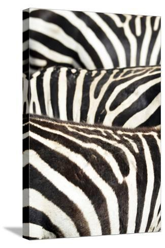 Kenya, Amboseli National Park, Close Up on Zebra Stripes-Anthony Asael-Stretched Canvas Print