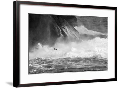 Antarctica, South Atlantic. Cormorant Flying over Frothing Sea-Bill Young-Framed Art Print