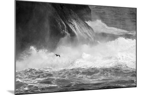 Antarctica, South Atlantic. Cormorant Flying over Frothing Sea-Bill Young-Mounted Photographic Print