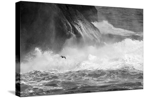 Antarctica, South Atlantic. Cormorant Flying over Frothing Sea-Bill Young-Stretched Canvas Print