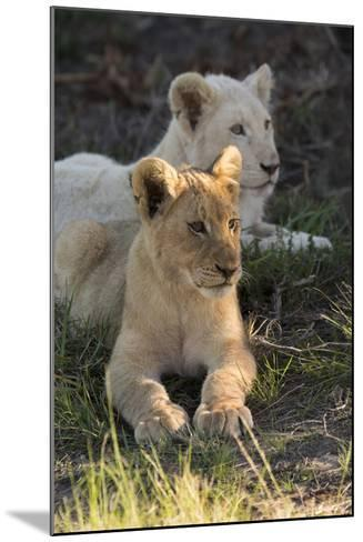 South Africa, East London. Inkwenkwezi Game Reserve. Lion Cubs-Cindy Miller Hopkins-Mounted Photographic Print
