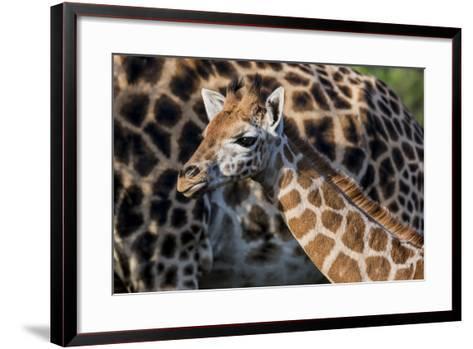 Kenya, Nairobi, Langata, Hog Ranch-Alison Jones-Framed Art Print