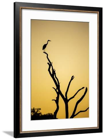 Botswana, Chobe NP, Savuti, Silhouette of Yellow-Billed Egret at Dusk-Paul Souders-Framed Art Print
