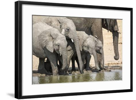 Namibia, Etosha National Park. Elephants Drinking at Waterhole-Wendy Kaveney-Framed Art Print