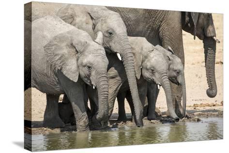 Namibia, Etosha National Park. Elephants Drinking at Waterhole-Wendy Kaveney-Stretched Canvas Print