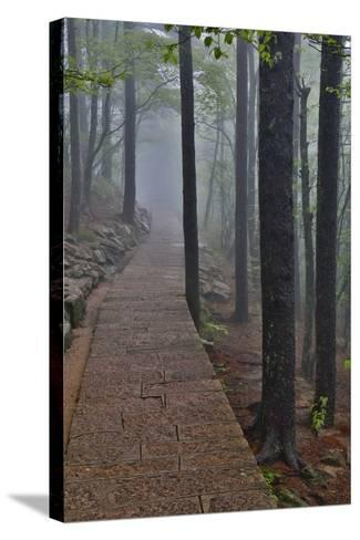 Trail in Fog, Yellow Mountains a UNESCO World Heritage Site-Darrell Gulin-Stretched Canvas Print