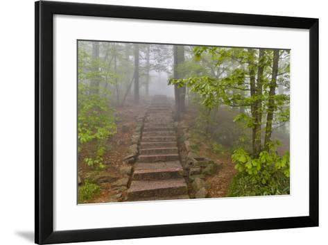 Trail in Fog, Yellow Mountains a UNESCO World Heritage Site-Darrell Gulin-Framed Art Print