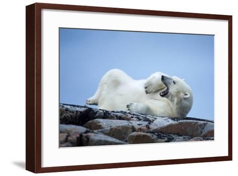 Canada, Nunavut Territory, Repulse Bay, Male Polar Bear Yawning-Paul Souders-Framed Art Print