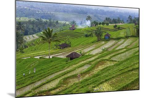 Water-Filled Rice Terraces, Bali Island, Indonesia-Keren Su-Mounted Photographic Print