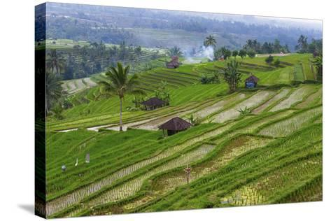 Water-Filled Rice Terraces, Bali Island, Indonesia-Keren Su-Stretched Canvas Print