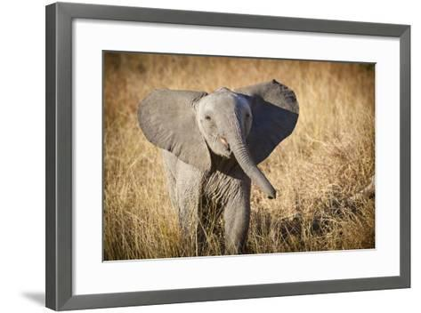 Londolozi Game Reserve, South Africa. Young Bush Elephant-Janet Muir-Framed Art Print