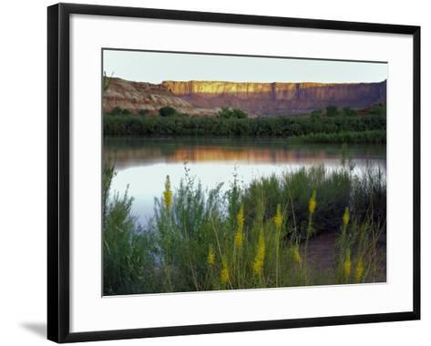 Canyonlands NP, Utah. Prince's Plume in Bloom Along Green River, Dawn-Scott T^ Smith-Framed Art Print