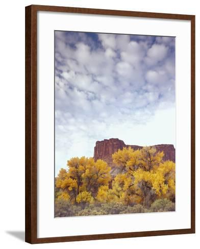 Canyonlands NP, Utah. Cottonwoods in Autumn Below Cliffs and Clouds-Scott T^ Smith-Framed Art Print