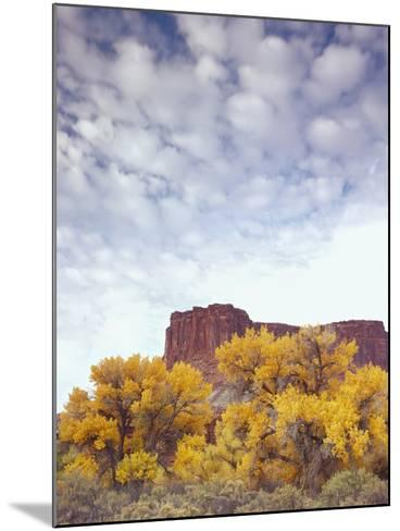 Canyonlands NP, Utah. Cottonwoods in Autumn Below Cliffs and Clouds-Scott T^ Smith-Mounted Photographic Print