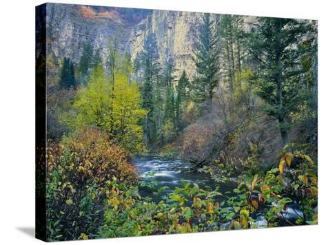 Utah. Along Logan River in Autumn. Logan Canyon. Uinta-Wasatch-Cache-Scott T^ Smith-Stretched Canvas Print