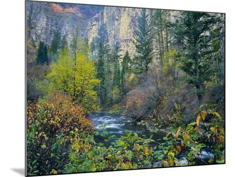 Utah. Along Logan River in Autumn. Logan Canyon. Uinta-Wasatch-Cache-Scott T^ Smith-Mounted Photographic Print
