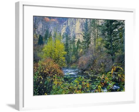 Utah. Along Logan River in Autumn. Logan Canyon. Uinta-Wasatch-Cache-Scott T^ Smith-Framed Art Print