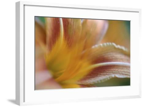 Daylily Abstract-Anna Miller-Framed Art Print