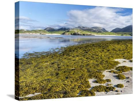 Isle of Lewis, the Uig Bay (Traigh Uuige) with Bladder Wrack. Scotland-Martin Zwick-Stretched Canvas Print