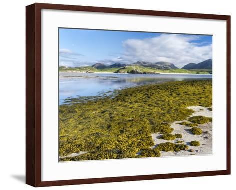 Isle of Lewis, the Uig Bay (Traigh Uuige) with Bladder Wrack. Scotland-Martin Zwick-Framed Art Print