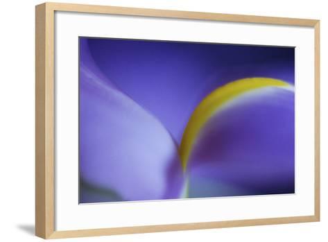 Iris Abstract-Anna Miller-Framed Art Print
