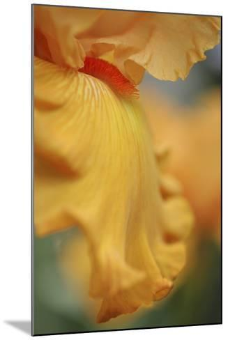 Iris Abstract-Anna Miller-Mounted Photographic Print