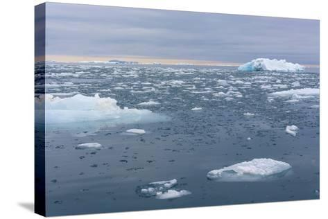 Norway. Nordaustlandet Island. Brasvelbreen. Brash Ice in the Water-Inger Hogstrom-Stretched Canvas Print
