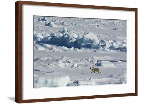 Norway. Svalbard. Hinlopen Strait. Polar Bear Walking on the Drift Ice-Inger Hogstrom-Framed Art Print