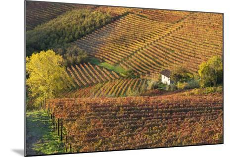 Vineyards, Near Alba, Langhe, Piedmont, Italy-Peter Adams-Mounted Photographic Print