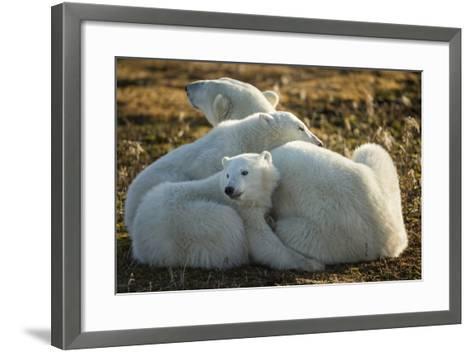 Canada, Manitoba, Churchill, Polar Bear and Cubs Resting on Tundra-Paul Souders-Framed Art Print
