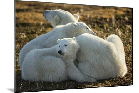 Canada, Manitoba, Churchill, Polar Bear and Cubs Resting on Tundra-Paul Souders-Mounted Photographic Print
