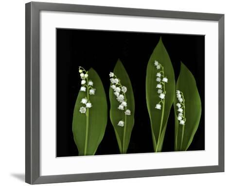 Lily of the Valley Study-Anna Miller-Framed Art Print